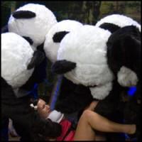 Panda Furry Gangbang